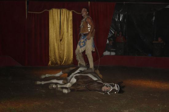cauchiz est son cheval galeschka