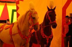 chevaux